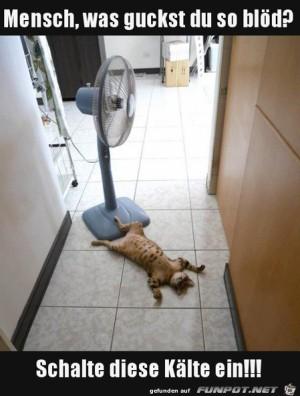 Katze-kühlt-sich-ab.jpg auf www.funpot.net