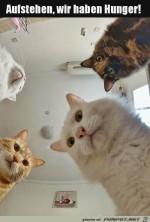 Katzen-wollen-Futter.jpg auf www.funpot.net