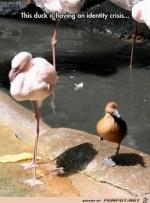 die-Ente-hat-eine-Identitätskrise.jpg auf www.funpot.net