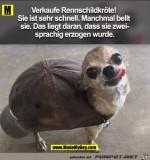 Rennschildkröte-zu-verkaufen.jpg auf www.funpot.net