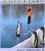 Tauchen-verboten.jpg auf www.funpot.net