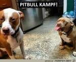 Böse-Pitbulls.jpg auf www.funpot.net