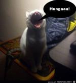 Hungaaaaa!!!.jpg auf www.funpot.net