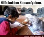 Tierische-Hausaufgaben-Unterstützung.jpg auf www.funpot.net