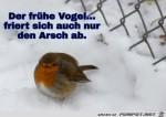 Der-frühe-Vogel.jpg auf www.funpot.net