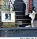 Hast-du-diese-Katze-gesehen?.jpg auf www.funpot.net
