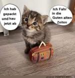 Kleines-Kätzchen-haut-ab.jpg auf www.funpot.net