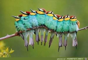Fabelhafte Tieraufnahmen 1