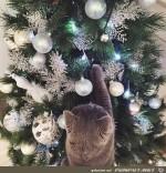 Katze-am-geschmückten-Baum.jpg auf www.funpot.net