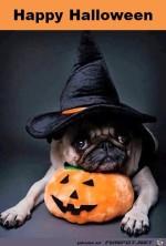 Halloween.jpg auf www.funpot.net