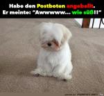 Habe-den-Postboten-angebellt.png auf www.funpot.net
