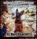 Ein-deutscher-Schäferhund....jpg auf www.funpot.net