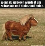 Dickes-Pferdchen.jpg auf www.funpot.net