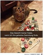 Geheime-Sammlung-der-Katze-entdeckt.jpg auf www.funpot.net