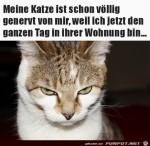 Katze-ist-genervt,-weil-dauernd-jemand-zuhause-ist.jpg auf www.funpot.net