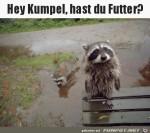 Hast-du-Futter.jpg auf www.funpot.net