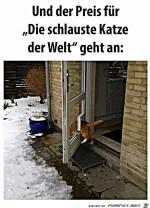 Dumme-Katze.jpg auf www.funpot.net