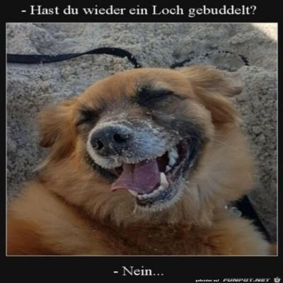 Zufriedener-Hund.jpg von Lina