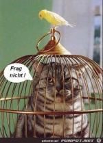 Frag-nicht.png auf www.funpot.net