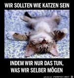 Wir-sollten-wie-Katzen-sein.jpg auf www.funpot.net