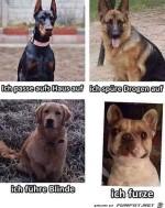 Die-verschiedenen-Hunde-Eigenschaften.jpg auf www.funpot.net