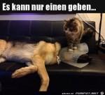 Typisch-Katze.jpg auf www.funpot.net
