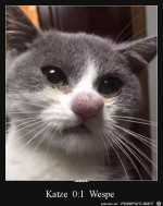 Arme-Katze.jpg auf www.funpot.net