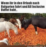 All-inclusive.jpg auf www.funpot.net