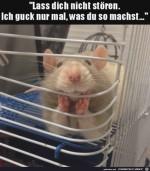 Will-nur-gucken,-was-du-machst.jpg auf www.funpot.net