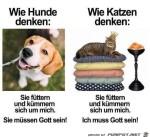 Hunde-und-Katzen.jpg auf www.funpot.net