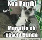 koa-panik.jpg auf www.funpot.net