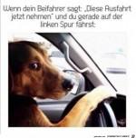 Beifahrer-nervt.jpg auf www.funpot.net
