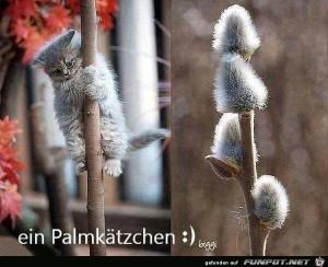 Palmkätzchen.jpg auf www.funpot.net
