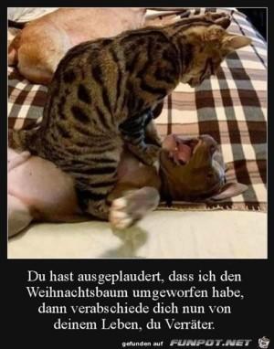 Hund-ist-ein-Verräter.jpg auf www.funpot.net
