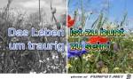 Zu-bunt.jpg auf www.funpot.net