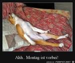 Montag-ist-vorbei.jpg auf www.funpot.net