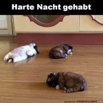 Harte-Nacht.jpg auf www.funpot.net