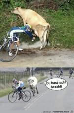 Kuh-lässt-sich-das-nicht-gefallen.jpg auf www.funpot.net