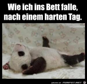 Wie-ich-ins-Bett-falle.jpg auf www.funpot.net