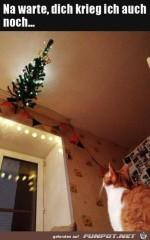 Katze-will-an-Weihnachtsbaum-ran.jpg auf www.funpot.net