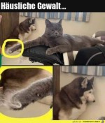 Böse-Katze.jpg auf www.funpot.net