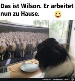 Wilson-arbeitet-jetzt-von-zuhause.jpg auf www.funpot.net