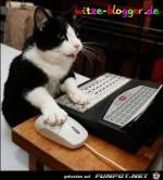 Katze-am-PC.jpg auf www.funpot.net