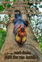 Eichhörnchen.png auf www.funpot.net