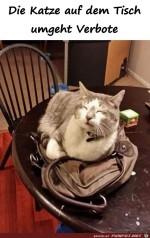 Die-Katze-umgeht.jpg auf www.funpot.net
