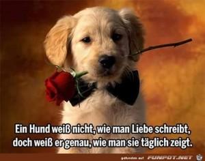 ein-Hund-weiss-nicht-.......jpg auf www.funpot.net