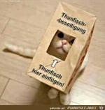 Katze-mit-Thunfisch-Tüte.jpg auf www.funpot.net