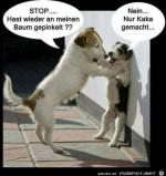 Hunde-Gespräch.jpg auf www.funpot.net