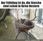 Die-Storche-sind-da.jpg auf www.funpot.net