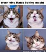 Katzen-Selfies.jpg auf www.funpot.net